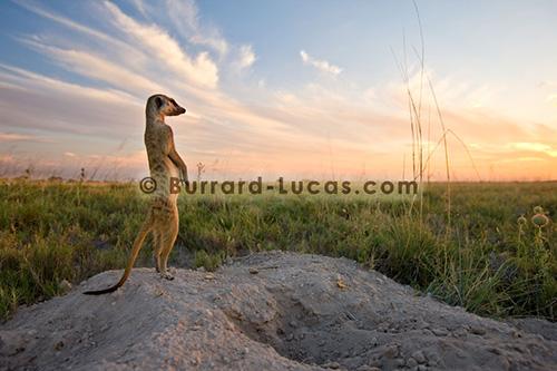 Matthew Burrard-Lucas