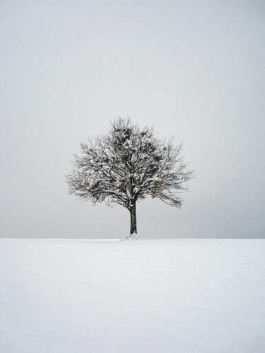 lonely tree in the snow...