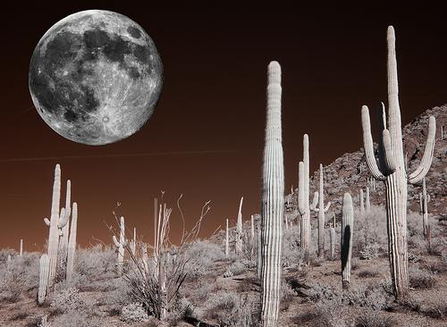 Lunar Fantasy