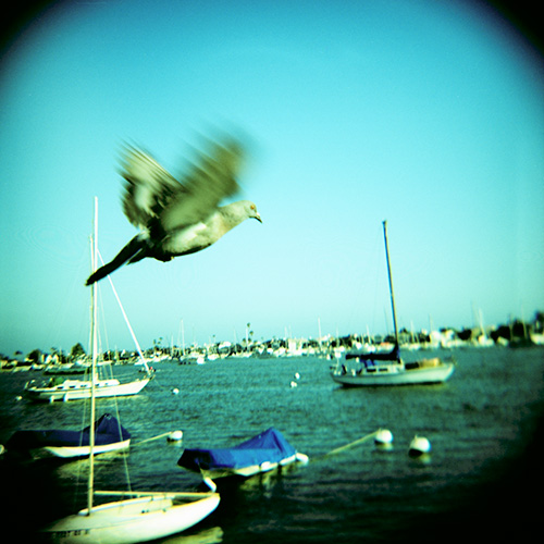 Flying and Floating