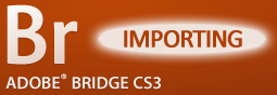 Adobe Bridge: Importing