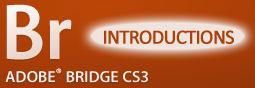 Adobe Bridge: Introductions