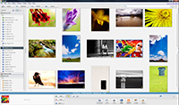 Picasa Interface