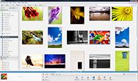 Picasa Interface