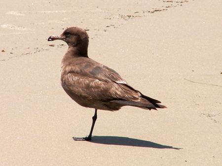 One-Legged Bird