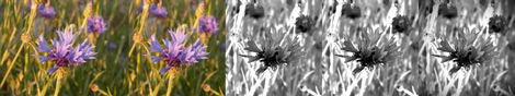 Dark Flower Process