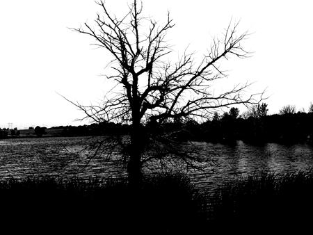 Dark Lake