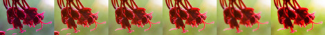 Photoshop process for the Red Tree Blooms photo
