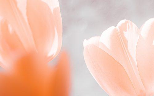 white flower in macro lens