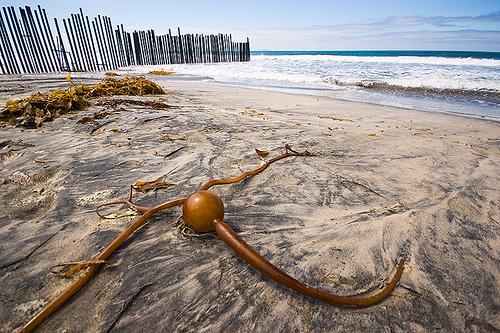 Kelp Me, by Brian Auer