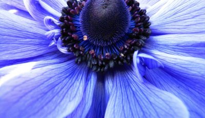 purple flower in macro shot